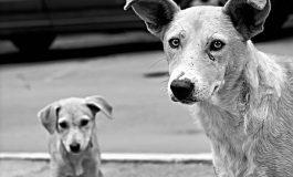 Семейство приюти двете умиращи от глад и жажда кучета в Провадия