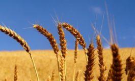 Варна: Националната служба за съвети в земеделието (НССЗ) ще проведе две изнесени приемни в областта