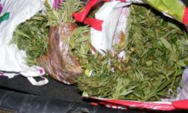 Разкриха оранжерия за марихуана в Долни чифлик