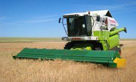 Производството на пшеница във Варненско е над 248 хил. тона, а средният добив е 510 кг