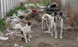 В Девня правят модерна клиника за бездомни кучета
