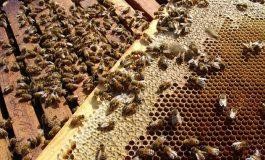 Донка Арбалиева, пчелар от с. Аспарухово, общ. Дългопол: Тази пчеларска година е провалена