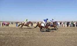 Над 30 чистокръвни коня участваха в първите конни надбягвания в община Ветрино