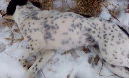 Престъпление срещу животните във Варненско! Сърцераздирателен разказ показа ужаса
