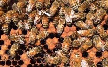 item_bees (Small)