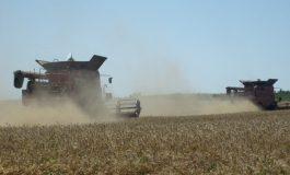 293 кг/дка е средният добив от маслодайна рапица към момента в областта