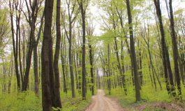 Подпомагат естественото възобновяване на 100 дка гори във Варненско