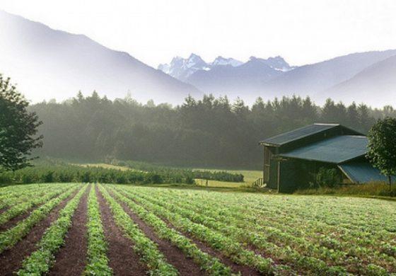 """Фонд """"Земеделие"""" изплати близо 1 млн. лв. за застраховане на продукция"""