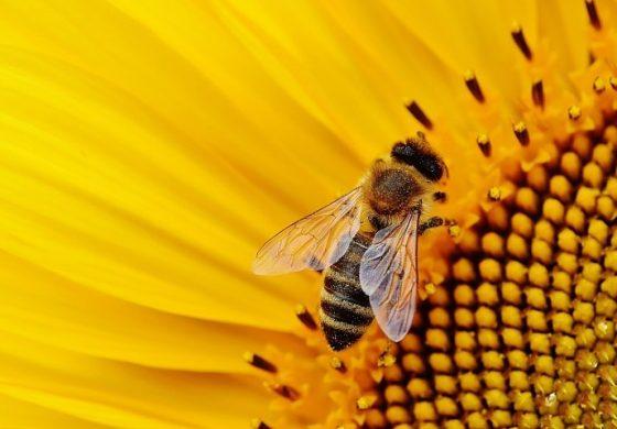 """Пчеларите получиха 3.2 млн. лв. oт Фонд """"Земеделие"""""""