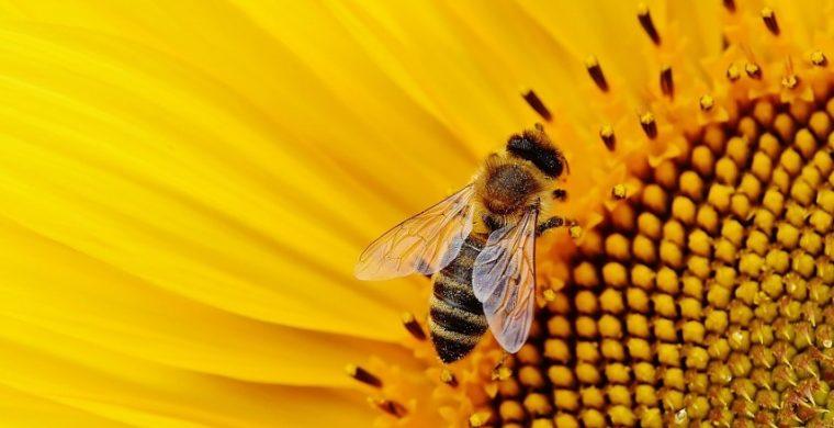 item_sunflower16437941920 (Small)