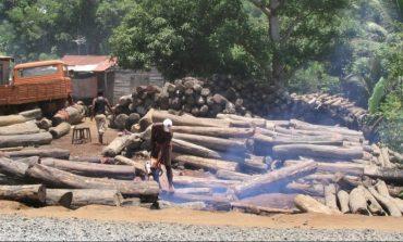 ООН: В България и още 14 страни изсичат последните стари гори в Европа