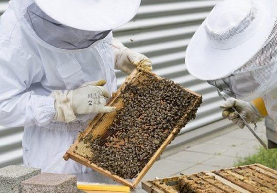 Пчеларите получиха близо 2,4 млн. лева по de minimis за 2017 г.