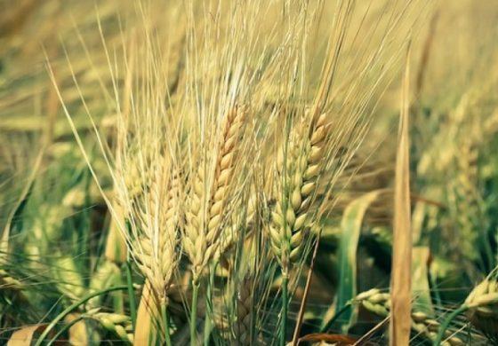 С 2,91 млрд. лева ще се финансират земеделски програми през 2018 г.