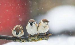 Студ до края на февруари, в началото на март ни чака рязко затопляне