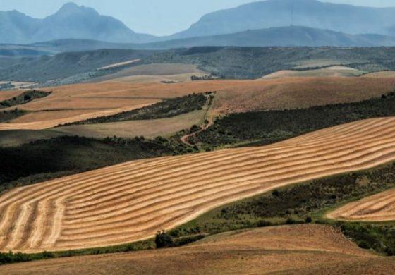 Земеделската земя привлича инвеститори с висока доходност и ниски рискове