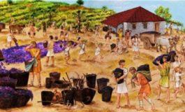 Деян Янчев, Общински културен институт: Бяла е място с дълбоки традиции в лозарството и винопроизводството
