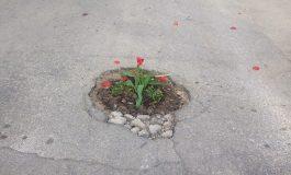 Засадиха цветя в дупки по Провадийските улици