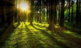 Нова гора ще бъде създадена край с. Слънчево, община Аксаково