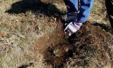Залесителна кампания в Девня