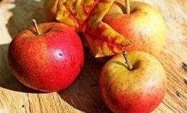 5 храни ни носят рекордни количества фибри