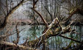 Нормална е ситуацията по отношение на водоемите в областта, реките Камчия, Провадийска и Ана дере са в коритата си