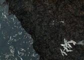 Провериха сигнал за мъртва кая в Белославското езеро