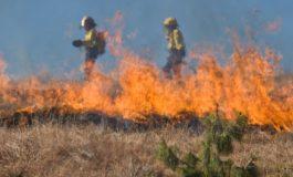 8 пожара в Девня заради безхаберно палене на треви и отпадъци