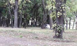 Паркът на Девня продължава да се ползва като паркинг