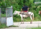 Проверяват сигнал за нелегален пазар за животни до входа на село Гроздьово