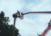 Спасиха паднал щъркел от гнездо в Провадийско