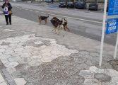 Жители на Аксаково се жалват от агресивни бездомни кучета