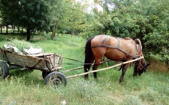 Камион помете каруца с пиян каруцар във Варненско