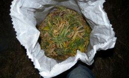 Спипаха мъж от Суворово с близо 100 грама трева