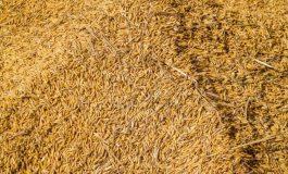 Бизнесмен с нагла измама със зърно в Провадия! Местната гимназия се видя в чудо заради него