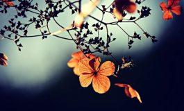 Животът е прекрасен, когато не очакваш, а просто живееш