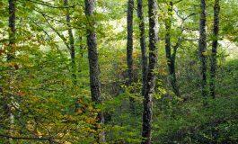 28 дървета от вида цер отсечени край село Слънчево