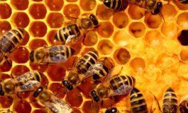 35 кошера с пчели изгоряха в Суворово