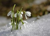 Задава се мека и топла пролет