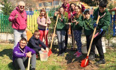 """""""Часът на земята"""" в Аксаково: Скаути засадиха декоративни дръвчета"""