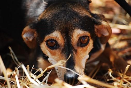 В Община Ветрино започна акция за залавяне и кастрация на бездомни кучета