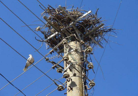 В Брестак спасяват щъркели с платформи за гнездене