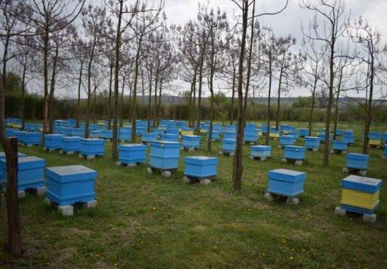 Биопроизводител увеличи кошерите си с ин витро процедури на пчели