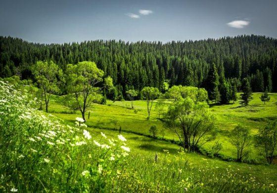 Красотата на Родопите: кои природни феномени трябва да посетите