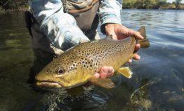Рибар улови пъстърва с прикрепен пръстен към опашката ѝ