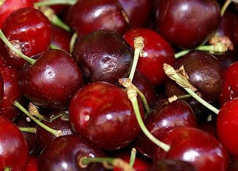Над 1000 кг/дка е средния добив при черешите в Дългопол