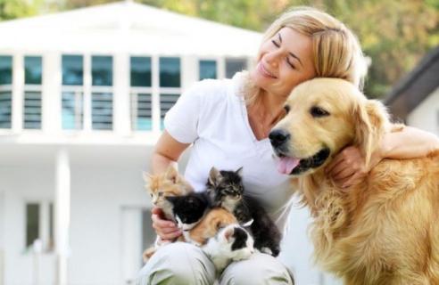 Галенето на куче или котка намалява стреса