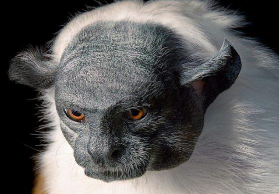 Застрашени от изчезване животински видове – вижте ги!