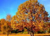НИМХ: Очаква ни топла и суха есен