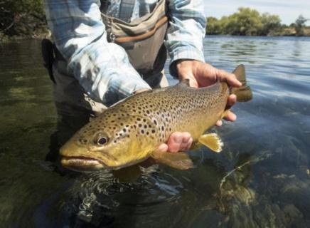 Нивата на живак в рибите се увеличават главоломно