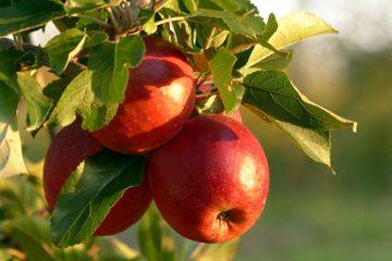 Българските плодове и зеленчуци без ДДС